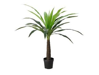 Pineapple Palm - 1.4m