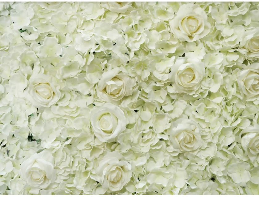 White Rose Flower Wall -