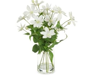Clematis Mix - White - 58cm