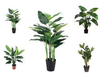 Jungle Plants - Pack of 5