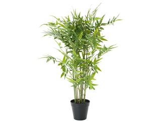 Small Bamboo Tree